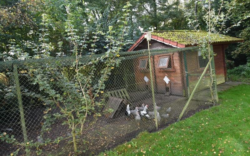 Hühnergehege bird portal kindertagesstätte städt